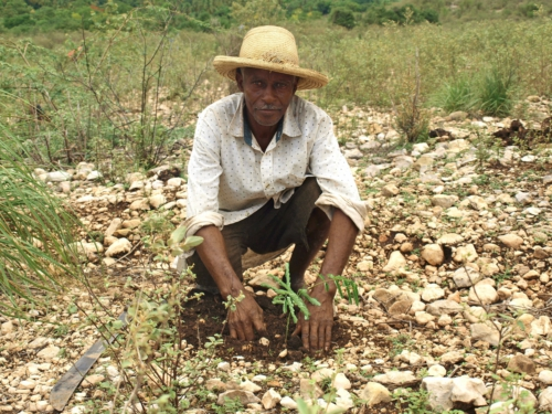 TIMBERLAND SMALLHOLDER FARMERS ALLIANCE